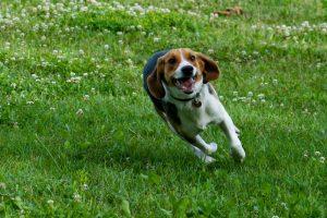 Childhood Dog Sambo